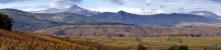 paysage vignoble de Riquewihr