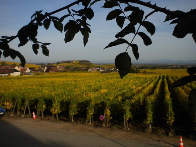 vue extérieure du Gîte le Mandlé à Riquewihr