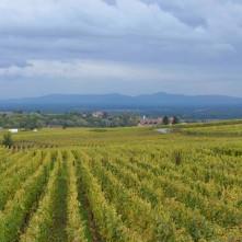 paysage depuis le gîte le mandlé à Riquewihr